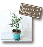 olive4.jpg
